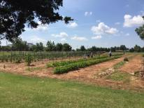Community Garden 6-11-16