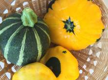 Community Garden squash