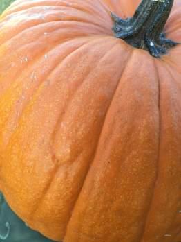 Diane pumpkin